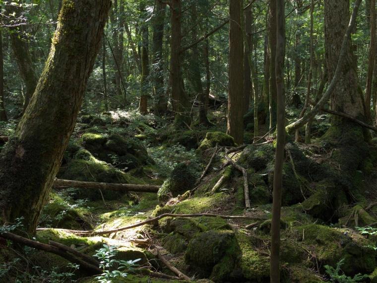 Selbstmordwald Aokigahara